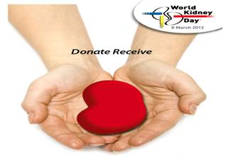 Kidney Donation NZ