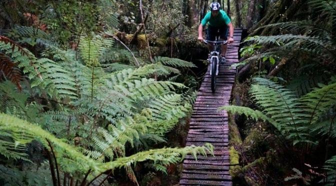 Biking the rainforest | Exploring the West Coast