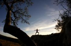 Jacqs Yoga Pride Rock