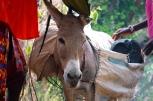 Thank you Donkey!