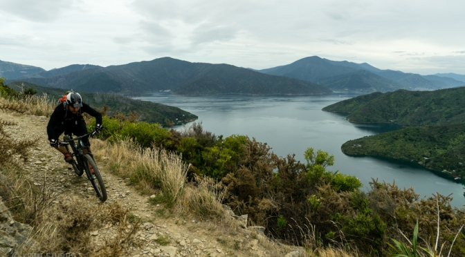 Sting Ray is delicious… | Biking Queen Charlotte Sounds